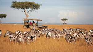 Safari a adrenalin